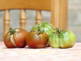 Tomates ecolóxicos