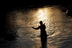 El reo y el salmón, nadadores de fondo y especies migradoras en peligro. En el Couto de Pesca del río Xuvia, el reo o trucha marinaes la especie más pescada y apreciada gastronómicamente.