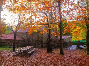 """Árbores na área recreativa do Río Xuvia en Pedroso. Imaxe seleccionada no V Concurso de Fotografía """"Cidade de Narón"""". Autor: Alberto Canosa Díaz."""