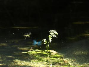 Flora e fauna do Río Xuvia