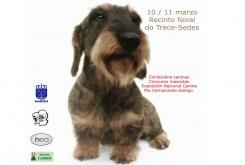 """O recinto feiral do Trece acollerá esta fin de semana a sétima edición da """"Exposición Canina"""" de Narón"""
